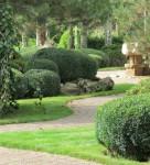 Озеленение и фигурная стрижка растений