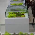 dekorativnyj-moh17