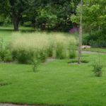 История рождения газона как основы в дизайне ландшафта